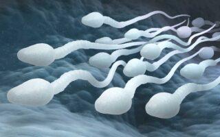 Китайские ученые открыли ген, связанный с бесплодием у мужчин